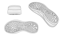 <h5>US PAT# D631,646</h5><p>Shoe sole design patent for Joya Schuhe AG</p>